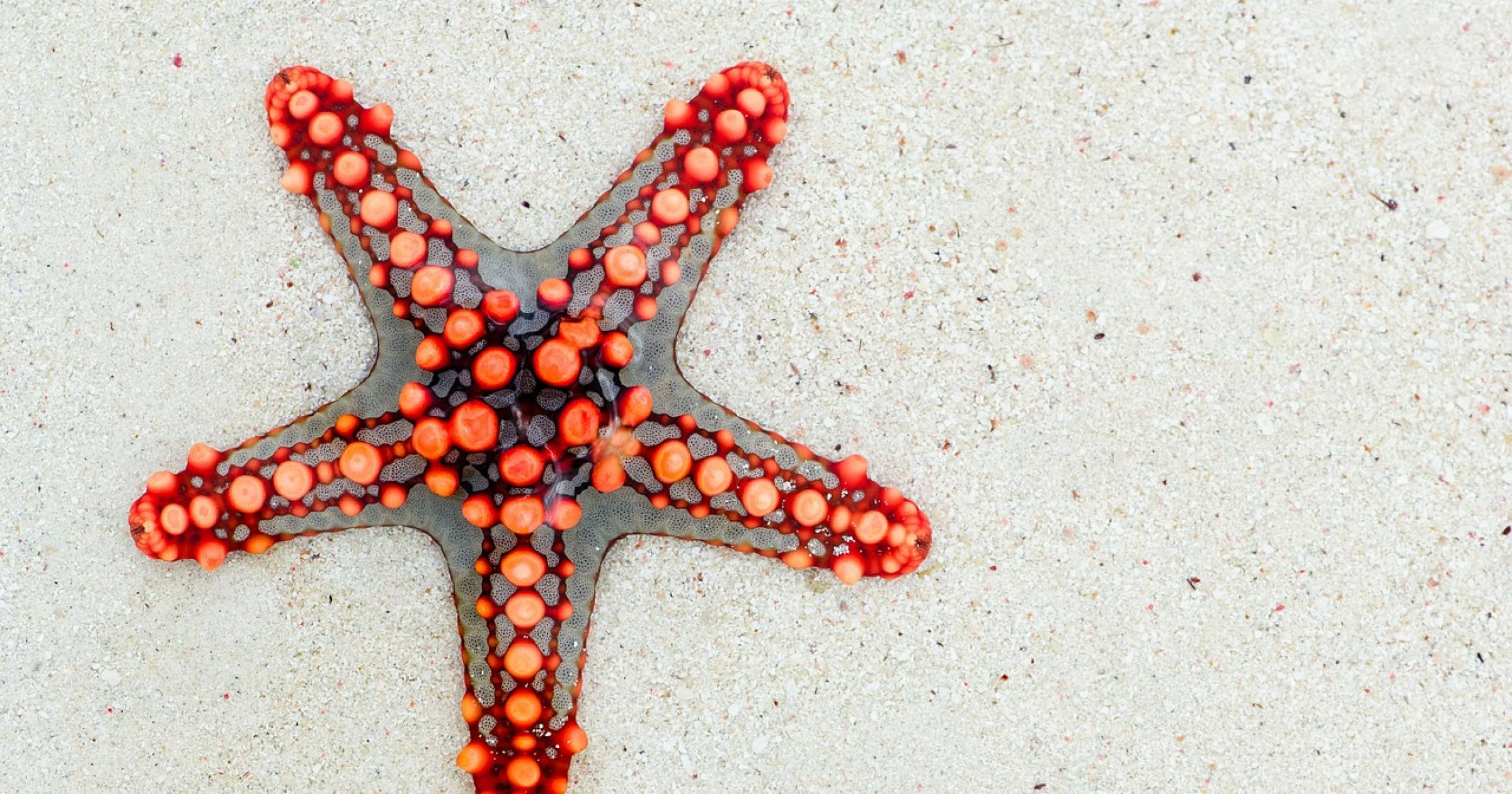 One Fish, Two Fish, Starfish, Blue Fish | Appetite to Play