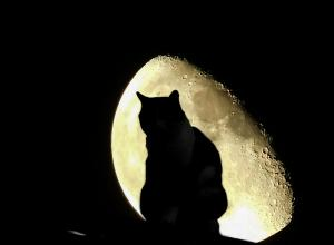 Cat outside the Halloween moon.