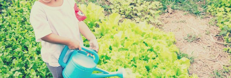 Child watering vegetables that are growing in a garden.
